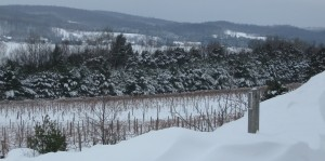 View from the Winery Parking Lot